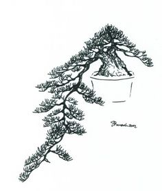 This style is modeled after trees that grow over water or down the side of a mountain. Hiding within the crevices of the mountain side allow for many pad layers to develop as the tree keeps g… Bonsai Tree Types, Indoor Bonsai Tree, Tatoo Tree, Prunus Mume, Bonsai Styles, Wire Trees, Sketches, Drawings, Illustration
