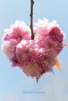 Perfect flower for valentines day heart shaped pink petals galleria vittorio emanuele ii comemora 150 anos restaurada mightylinksfo