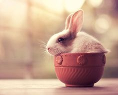 http://www.boredpanda.com/cute-bunnies-animal-photography-arefin-ashraful/