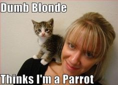 blondes_that_fail_miserably_every_time_36_1
