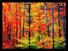 Farbenfroher #Herbstwald / colourful #autumn forrest Bluepoint, Wikipedia France
