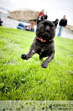Leaping lizards- this is exactly what Peppa looks like when she runs!