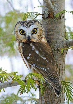 Owl:#animales genios