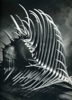 Andreas Feininger. studies of the structure of natural objects.