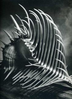 Andreas Feininger  shell... Love the lighting!