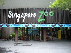 Singapore could be an alternative for your vacation due to many fun tourist attractions in this country. Singapore has been recorded among . Singapore Zoo, Singapore Travel, Cool Places To Visit, Places To Go, Singapore Attractions, Zoo Park, Zoological Garden, Tour Around The World, Wildlife Park