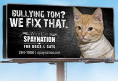 We love the creativity of Wild Cat SpayNation clinic that found that many of the usual spay/neuter messages were not working so they created 10 new billboards with a humorous approach that the public has loved! We do too!