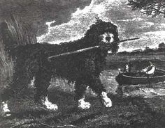 The Portuguese Water Dog: One of the earliest accounts of the breed is from when a Monk wrote about a water dog that saved a man from drowning in Lisbon - Portugal. Hounds Of Love, Sea Activities, Portuguese Water Dog, Lisbon Portugal, Puppy Love, Cool Photos, Dog Cat, Puppies, Animals