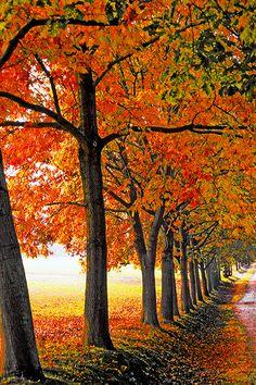 ✯ Viale delle quercie, Italy