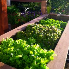 Deck planter becomes salad bar this summer!