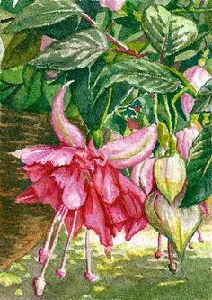 "watercolor paintings of fuchsia | SFA ACEO 2.5x3.5"" Fuchsia - watercolor art ""Bella Rosa"""