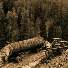 your photo is really very good. Giant Tree, Big Tree, Old Pictures, Old Photos, Tree Logs, Trees, Timber Logs, Logging Equipment, Heavy Equipment