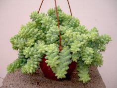 Viveros Vangarden: septiembre 2012 Herbs, Exterior, Garden, Vivarium, Plants, September, Blue Prints, Garten, Lawn And Garden