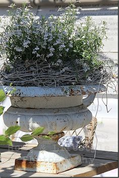 I like the idea of the vine wreath at base of plant, it helps hold everything up if plant is prone to splitting & flopping but also hides soil from view.