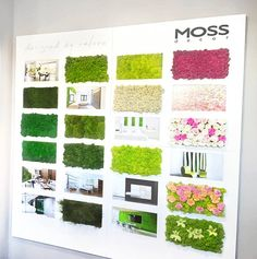 Oferta MOSS decor jest niezwykle szeroka. 5 rodzajów mchu, mech z roślinami stabilizowanymi i kwiatami, flowerwall i projekty indywidualne czyli sposób na piękne zielone wnętrze. Ekspozytor u partnera MOSS decor w Hiszpanii.