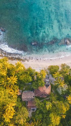 Drone view from above, the ocean, palm trees