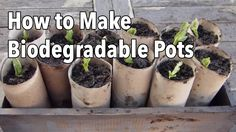 Diy Planter Box Ideas Unique How to Make Biodegradable Plant Pots Homemade Seed Starting Pots Diy Planter Box, Diy Planters, Garden Planters, Balcony Garden, Outdoor Plants, Potted Plants, Plant Pots, Outdoor Gardens, Organic Gardening