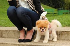 boo the dog :) gimme.