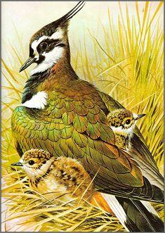 Wildlife Paintings, Wildlife Art, Exotic Birds, Colorful Birds, Graffiti Kunst, Art Textile, Bird Illustration, Bird Drawings, Bird Pictures