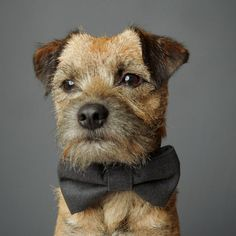 Smokey Grey Cotton Dog Bow Tie by charliebegood on Etsy, $14.00