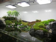 90g Cliffside Paludarium Build Thread | Chinese water dragon | Pinter…