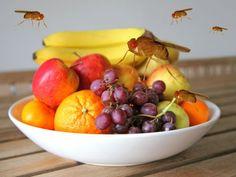 Kaum ist der (Früh-)Sommer da, sind es auch die Fruchtfliegen. Die kleinen Plagegeister tummeln sich vor allem in Obstkörben, Abflüssen und Mülleimern – nervig! Doch Sie müssen sich den kleinen Fliegen nicht geschlagen geben, denn mit diesen 10 Tipps können Sie sie ganz einfach aus der Wohnung verbannen. #fruchtfliegen #fliegen #insekten #essen #nahrung #obst #gemüse