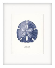A beautiful indigo blue sand dollar adapted from a vintage illustration, digitally enhanced and added to a lightly tinted background to lend to the ocean inspired natural history feel.    Print Size:  The print shown is 8 x 10 and is centered on an 8 1/2 by 11 archival paper. Matte and frame are for demonstration purposes. Your print will arrive ready for your own special touch.    Please remember that colors may vary due to monitor settings.    See more:  High Street Vintage:  Natural h...
