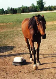 "How to deal with and understand your horse's ""rude"" behavior: Natural Horse Magazine Horse Barns, My Horse, Horse Love, Horse Riding, Riding Gear, Horse Training Tips, Horse Tips, Horse Behavior, Horse Magazine"