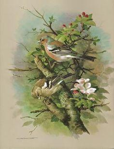The Birds of the Village by Basil Ede Decoupage Art, Backyard Birds, Bird Illustration, Bird Pictures, Bird Prints, Bird Art, Painting Techniques, Beautiful Birds, Cat Art