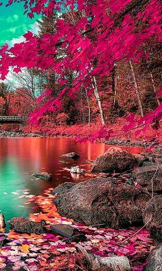 Photo Background Images, Photo Backgrounds, Beautiful Nature Wallpaper, Beautiful Landscapes, Landscape Photography, Nature Photography, Fall Wallpaper, Trendy Wallpaper, Autumn Nature