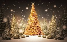 New Post gold christmas tree wallpaper Gold Christmas Tree, Beautiful Christmas Trees, Christmas Pictures, Merry Christmas, Christmas Time, Christmas Movies, Xmas Trees, Christmas Decorations, Christmas Jesus