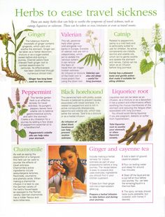 Herbs to ease travel sickness