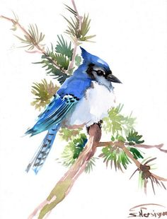 Blue Jay Original watercolor painting 12 X 9 in by ORIGINALONLY, $30.00