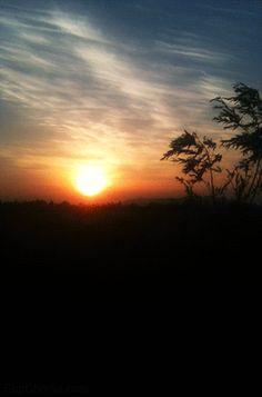Waving trees at sunset <3