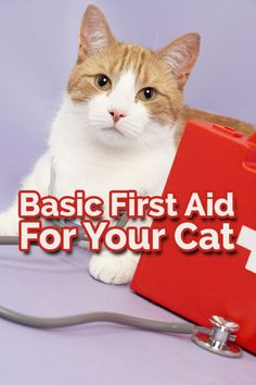 If your feline friend is ever injured, knowing how to carry out basic first aid could mean the difference between life and death. This guide will help you be prepared for an emergency give you guidelines to keep your cat safe until you can get to the vet.
