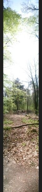 Naturpark Taunus