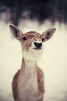 ★ L' Etoile   Deer