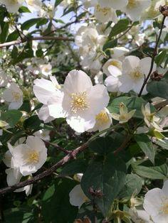 Cilindro en flor