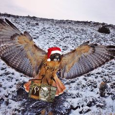 Are you a Christmas slacker like us? Are you currently having a panic attack about what to get the badass hunting woman in your life? Fear not, we've got you covered! Call me, Katherine Grand, today and we can e-mail you a Prois gift card of any amount you choose to be talon delivered by Kit the red-tailed hawk or the internet. Whichever. Call me at 970-641-3355!