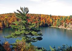 Pink Lake in Gatineau Park Pink Lake, Quebec, Canada, Seasons, River, Park, Nature, Forests, Outdoor