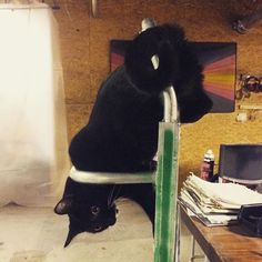 Yup that is our cat! Hard to get any work done with her hanging around.