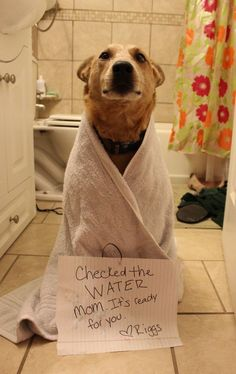 Dog Shaming on Tumblr!