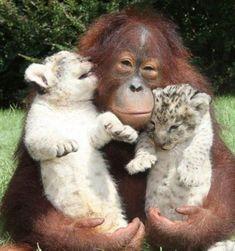 animal friends046
