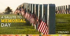 memorial day 2015 events houston