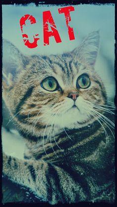 I love my cat 🐈