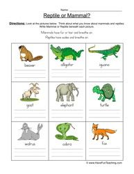 vertebrates chart teaching science pinterest ciencia natural y. Black Bedroom Furniture Sets. Home Design Ideas