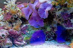 Sandeep - 2010 Featured Nano Reefs - Featured Aquariums - Monthly Featured Nano Reef Aquarium Profiles - Nano-Reef.com Forums