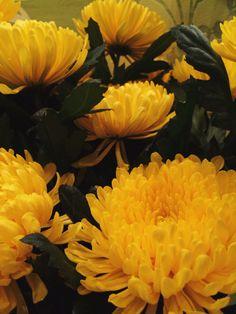 Flowers by Yana Py on 500px
