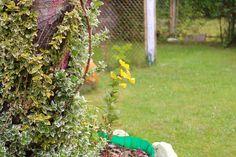 W ogrodzie | in the garden