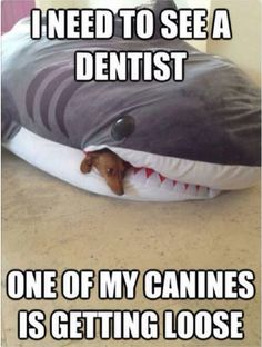 It's FUNNY FRIDAY! Another hilarious funny meme! Click the picture to see 100 more Funny Friday pictures! Funny Cute, Haha Funny, Funny Dogs, Funny Memes, Funny Stuff, Freaking Hilarious, Dog Memes, Funny Captions, Puns Jokes